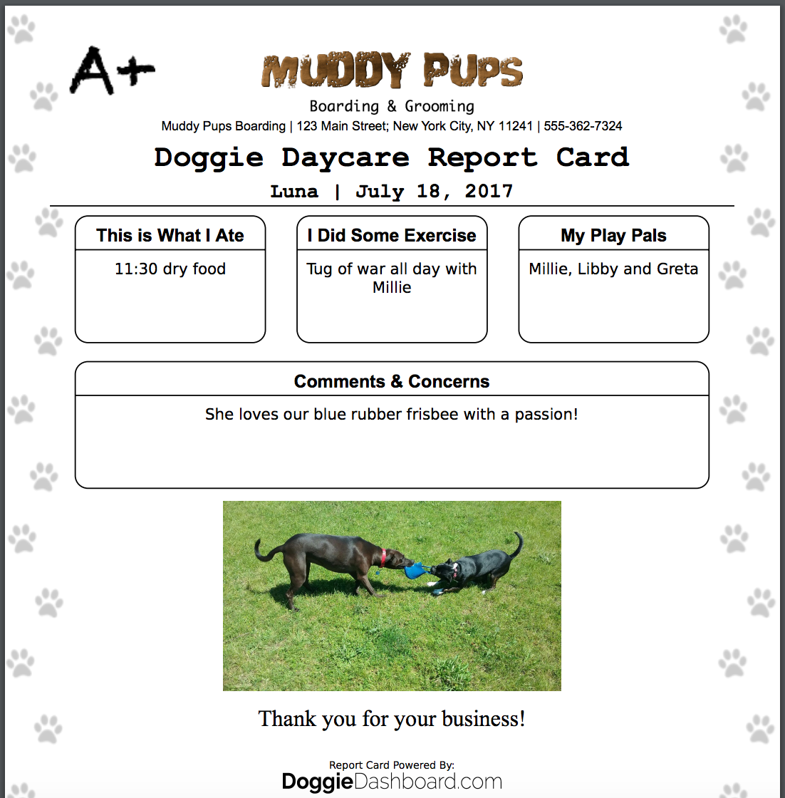 DoggieDashboard Free Dog Daycare Kennel Boarding Software - What is invoice number on receipt online pet store